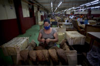 """Norma Perez selects the best leaves to roll cigars at the La Corona Tobacco factory where a worker reads to them in Havana, Cuba, Tuesday, June 29, 2021. Readers are on staff at the state-owned factories, a job the government has declared a """"cultural patrimony of the nation,"""" and workers elect the readers and vote on what will be read. (AP Photo/Ismael Francisco)"""