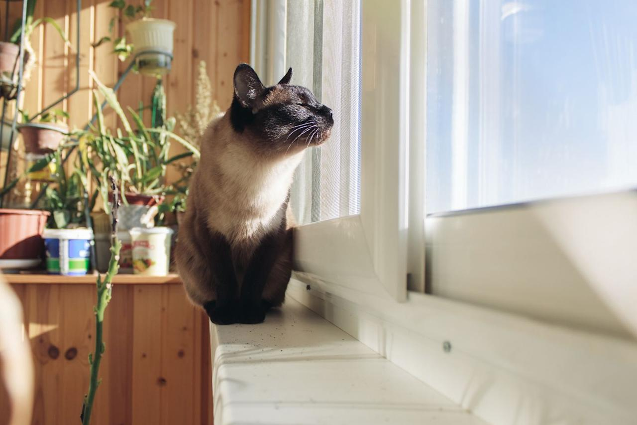 """<p>Plenty of <a href=""""https://www.goodhousekeeping.com/home-products/g23739682/pet-friendly-apartment-makeover/"""" target=""""_blank"""">apartments</a> allow cats because they're quiet, so they are less likely to wake the neighbors up when someone rings your doorbell.</p><p><strong>RELATED:</strong> <a href=""""https://www.goodhousekeeping.com/life/pets/g27018110/best-pet-hair-removers-amazon/"""" target=""""_blank"""">9 Best Pet Hair Removing Products on Amazon That Actually Work</a></p>"""