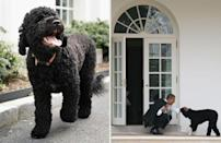 """<p>Left: Sunny walks outside the White House Press Room; President Barack Obama pets his Portuguese water dog Bo outside the Oval Office.</p><p><strong>More from Town & Country:</strong><br> • <a href=""""http://www.townandcountrymag.com/leisure/drinks/how-to/a1777/preppy-southside-cocktail/"""" rel=""""nofollow noopener"""" target=""""_blank"""" data-ylk=""""slk:4 Recipes for the Preppy Cocktail that Signals the Start of Summer"""" class=""""link rapid-noclick-resp""""><strong>4 Recipes for the Preppy Cocktail that Signals the Start of Summer</strong></a><br> • <a href=""""http://www.townandcountrymag.com/leisure/dining/a1823/how-to-eat-a-lobster/"""" rel=""""nofollow noopener"""" target=""""_blank"""" data-ylk=""""slk:How to Eat a Lobster"""" class=""""link rapid-noclick-resp""""><strong>How to Eat a Lobster</strong></a><br> • <a href=""""http://www.townandcountrymag.com/leisure/arts-and-culture/reviews/a1787/f-scott-fitzgerald-quotes/"""" rel=""""nofollow noopener"""" target=""""_blank"""" data-ylk=""""slk:15 Best F. Scott Fitzgerald Quotes"""" class=""""link rapid-noclick-resp""""><strong>15 Best F. Scott Fitzgerald Quotes</strong></a></p>"""