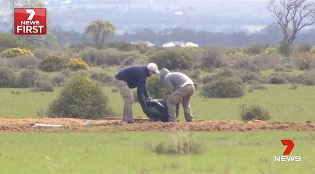 Parks and Wildlife workers dig up the bodies of wombats on the property in the Murraylands. Photo: 7 News