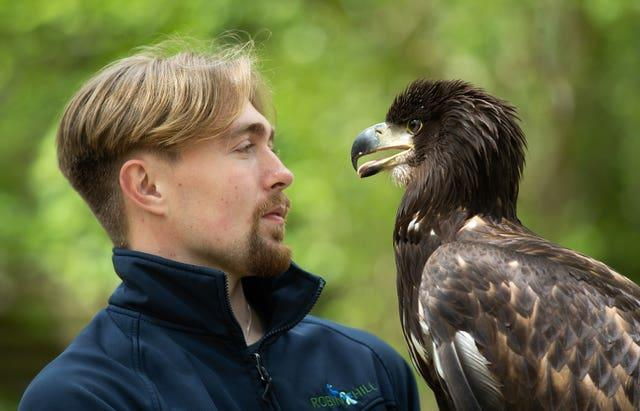 Charlie Rolle with 10-month-old white-tailed sea eagle Chief