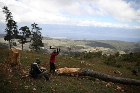 A man cuts a tree in the fields of Chapotin, with Boucan Ferdinand and the Dominican Republic in the background, on the trail that connects Boucan Ferdinand and Chapotin, Haiti, April 11, 2018. REUTERS/Andres Martinez Casares
