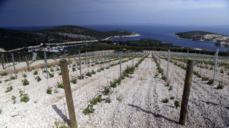 In this April 28, 2013 photo, a vineyard above the Adriatic sea is seen in Hvar, southern Croatia. Croatians are gearing up to celebrate their entry into the EU, but don't pop the corks just yet. A heated trademark battle over the country's beloved sweet dessert wine has some feeling less than bubbly, mirroring rapidly declining enthusiasm among Croats for membership in the economically battered bloc. (AP Photo/Darko Bandic)
