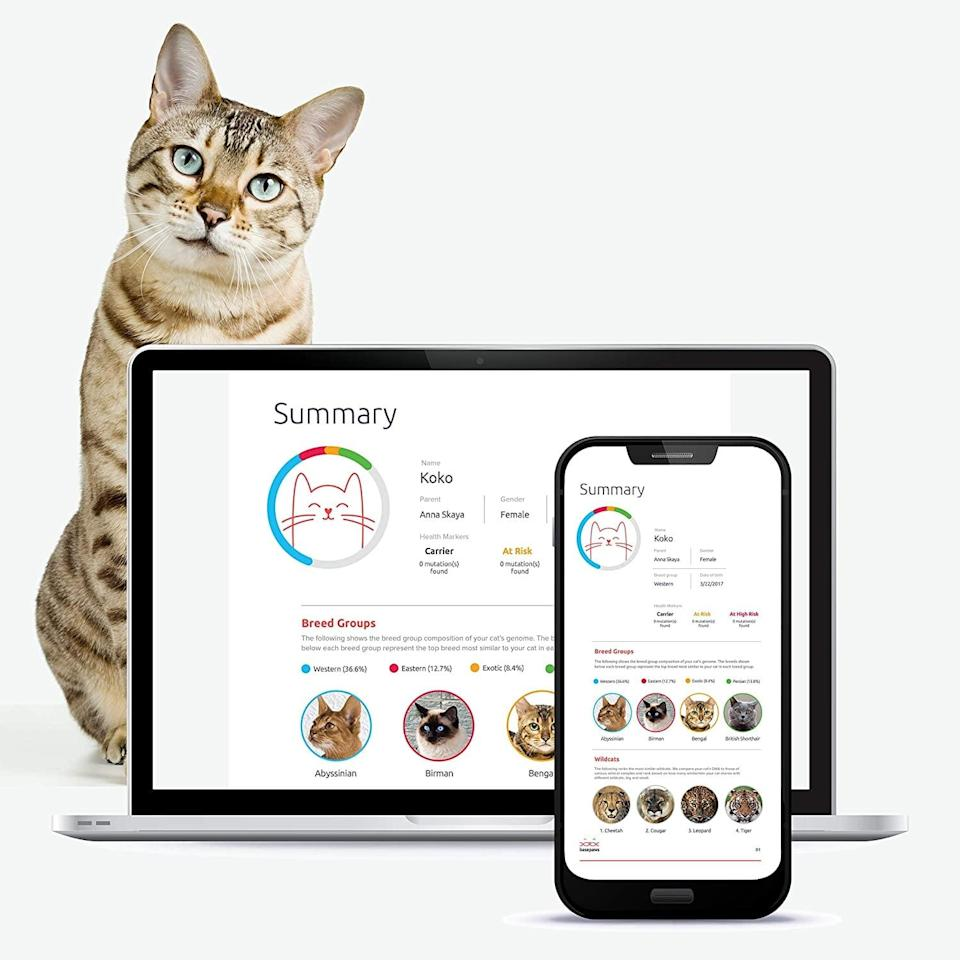 <p>Get to know your cool cat with the <span>Basepaws Cat DNA Test Kit </span> ($129). Just swab and get your report in just 4-6 weeks.</p>