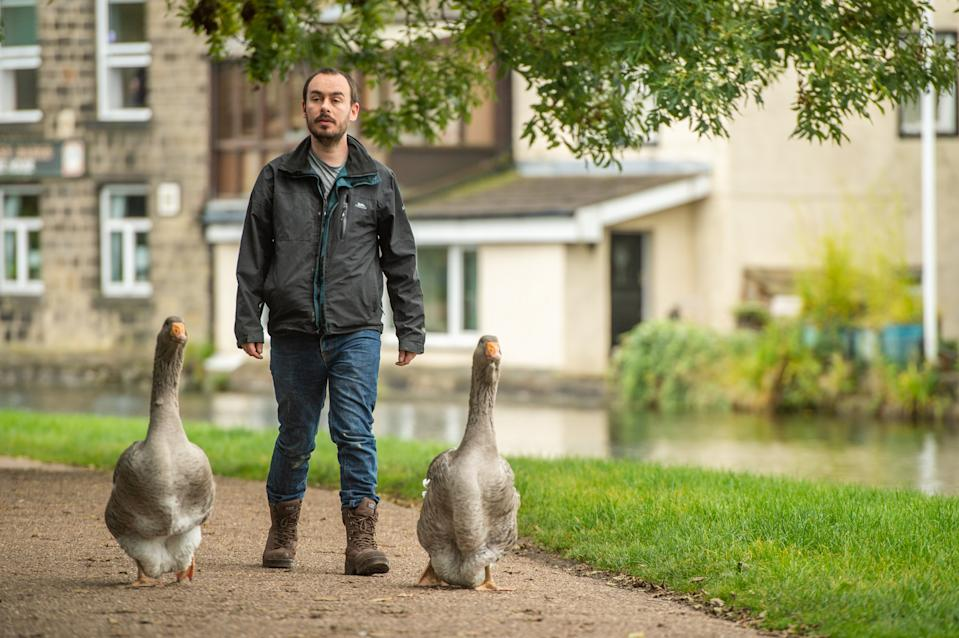 Sven Kirby, 34, takes his pet geese Beep Beep and Norbert (21wks) along the canal to the pub in Leeds, West Yorks., October 05 2020.  See SWNS story SWLEgeese; An animal obsessed singleton has purchased two pet geese - which he puts in nappies and takes to the pub. Eccentric Sven Kirby, 34, has hand reared the birds from five days old after buying them for £40 each in June. He is often seen walking the streets, parks and canals of Leeds, West Yorks., with Beep Beep and Norbert waddling along behind. When admin assistant Sven is at home the pair have free reign of the house, while at night time and on weekdays they are confined to a pen in the garden. Incredible pictures and videos show Norbert and Beep Beep walking down the street, sleeping on Sven's chest, wearing their nappies and relaxing at the pub.