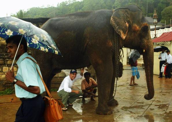 KANDY, SRI LANKA - MARCH 15:  Justin Langer of Australia takes shelter from the rain under an elephant during a visit to the Temple of the Tooth on March 15, 2004 in Kandy, Sri Lanka. (Photo by Hamish Blair/Getty Images)