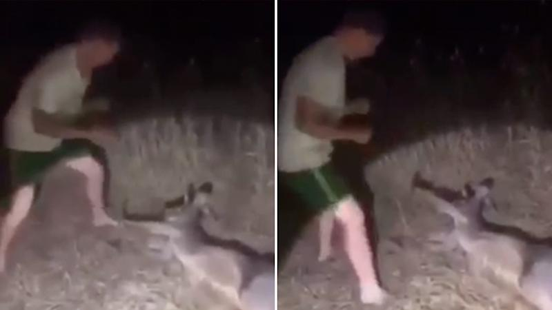 'Putrid': Man filmed attacking kangaroo