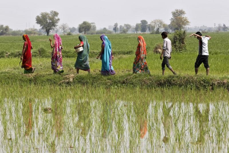 Exclusive: India's rice exports fall sharply as sanctions delay payments from Iran