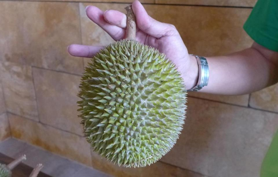 Known as Jin Feng or Golden Phoenix, this durian has a light green to greyish brown husk. The Jin Feng can be distinguished by its small and round thorns that converge at the base of the fruit. (Photo by: Erin Kimbrell/Yahoo Singapore)