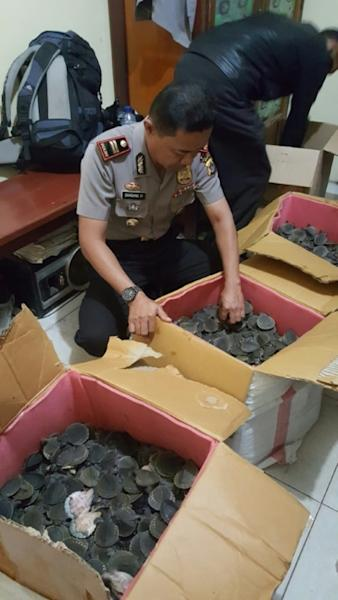 It was not clear where the turtle shipment was headed