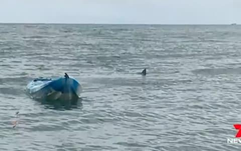 The great white shark and the kayak where the teenage girl was attacked  - Credit: 7 News
