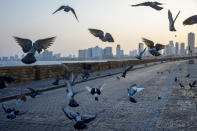 Pigeons fly at Tel Aviv's empty promenade during a three-week nationwide lockdown due to the coronavirus pandemic, in Tel Aviv, Israel, Sunday, Sept 20, 2020. Israel went back into a full lockdown to try to contain a coronavirus outbreak that has steadily worsened for months as its government has been plagued by indecision and infighting. (AP Photo/Oded Balilty)