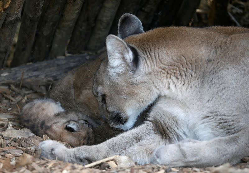Not one, not two, but three! Paris zoo enjoys rare baby boom