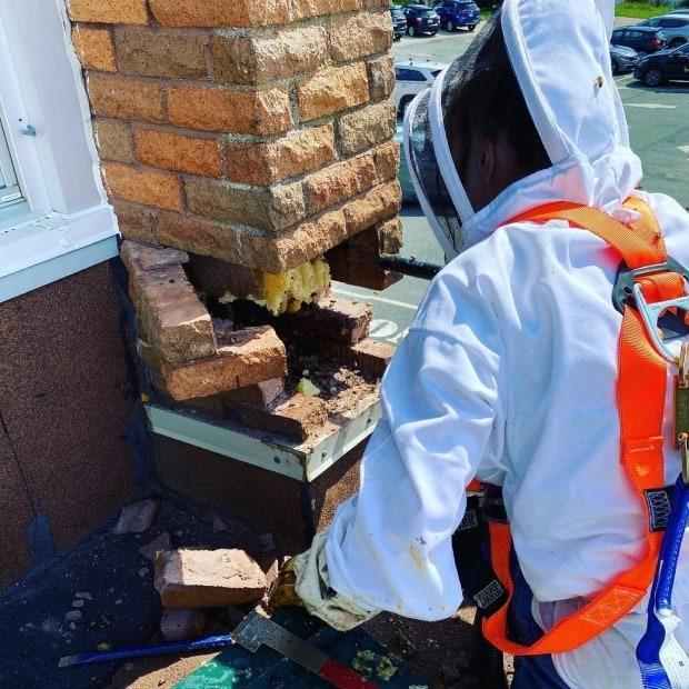 Swarming bees can end up in tree branches or inside homes and chimneys.