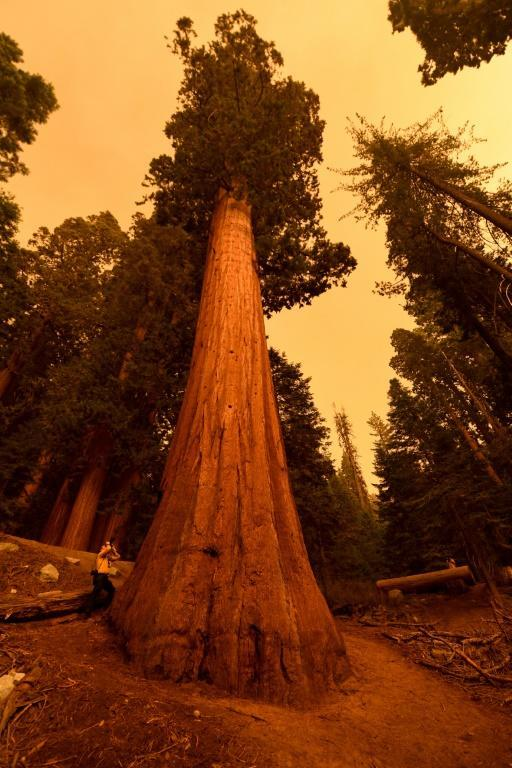 """Photographer Stuart Palley (L) takes photographs of giant sequoia trees among smoke filled skies in the """"Lost Grove"""" along Generals Highway north of Red Fir during a media tour of the KNP Complex fire in the Sequoia National Park in California on September 17, 2021 (AFP/Patrick T. FALLON)"""