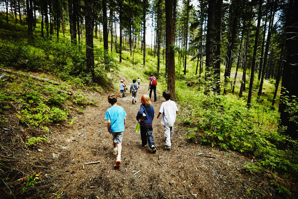 Group of young kids walking on trail in the woods with camp counselor at summer camp. (Thomas Barwick/Getty Images)