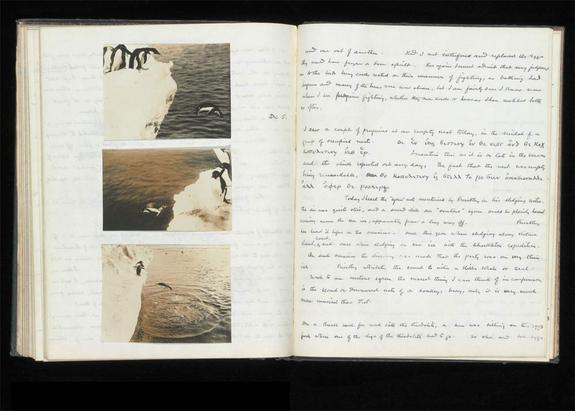 """Levick kept his notes on the penguins in two separate notebooks, one of which was for the """"depraved"""" sexual acts he observed. The notebook, some coded in Greek, is being displayed until Sept. 2, 2012 at the Natural History Museum's exhibition """""""