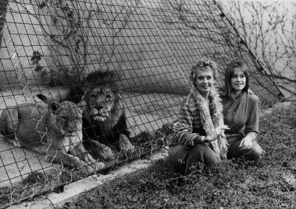 <p>To promote her film <em>Roar,</em> Tippi visits the London Zoo with her daughter, Melanie Griffith, and poses in front of the lions. We bet Melanie is reminded of her childhood pet lion, Neil. </p>