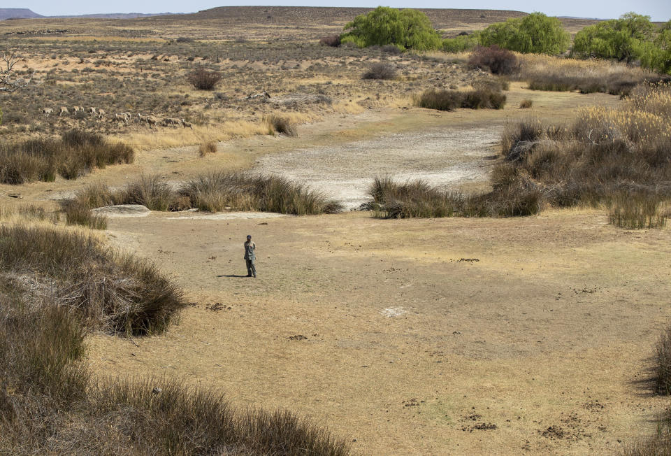 A sheepherder stands in the dry riverbed at Colesberg, Northern Cape, South Africa, Friday, Sept. 24, 2021. (AP Photo/Themba Hadebe)