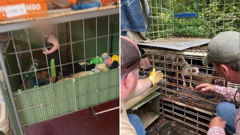 Pictured left is a one-year-old boy in a filthy cage surrounded by toys. On the right are two men looking at a caged animal in Henry County, Tennessee.