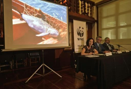 Endangered vaquita marina porpoise could be extinct by 2018: WWF