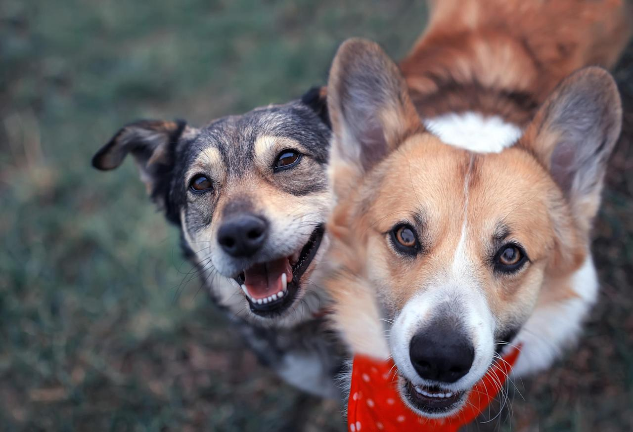 Codependent pets: How to reduce separation anxiety when ...