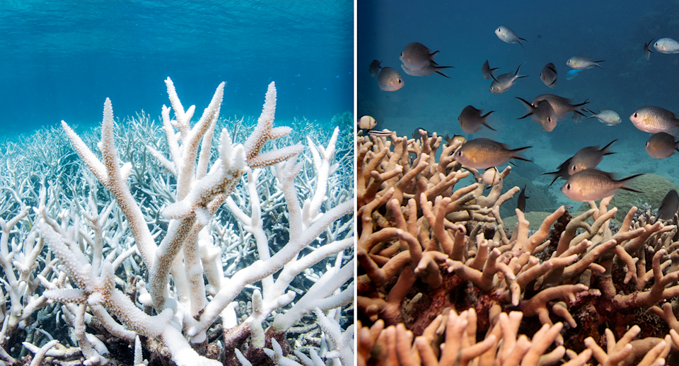 Left - Bleached coral. Right - Fish swimming near coral