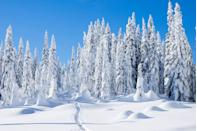<p>Imagine making snow angels in that fresh powder in Mount Baker Snoqualmie National Forest, Washington.</p>