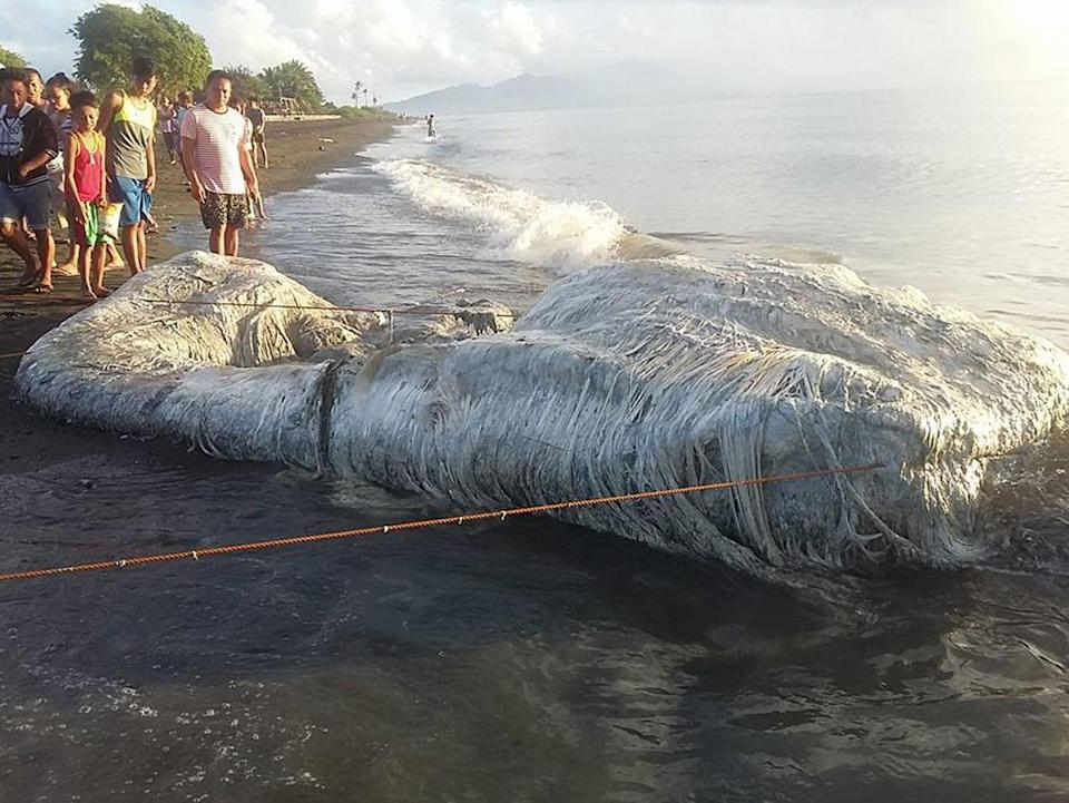 """Footage has shown the moment a mystery """"globster"""" sea creature washed up on a beach. Photo: Facebook/ Taru Tam Tam Maling"""