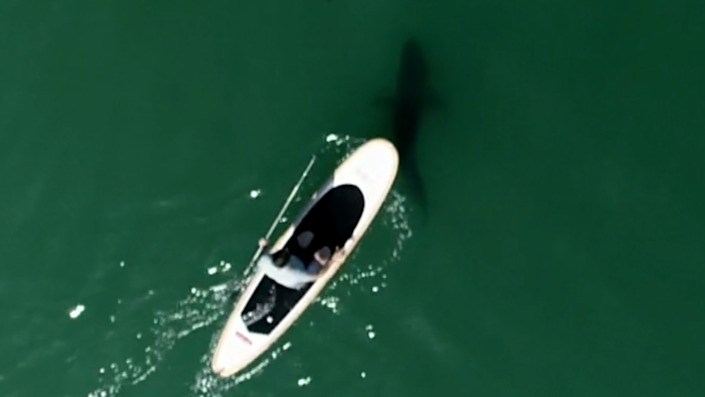 Carter Evans took a paddleboard the coast of Santa Barbara, and found Lowe's observations about swimmers' close encounters are true. / Credit: CBS News