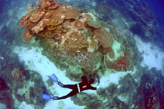 Great Barrier Reef declared 'dead' in obituary