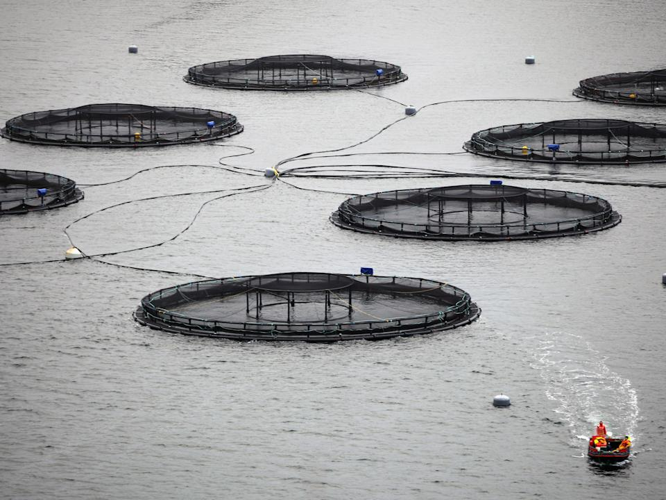 The Skye-based salmon farm  was due to have anti-predator nets installed later this month (Getty)