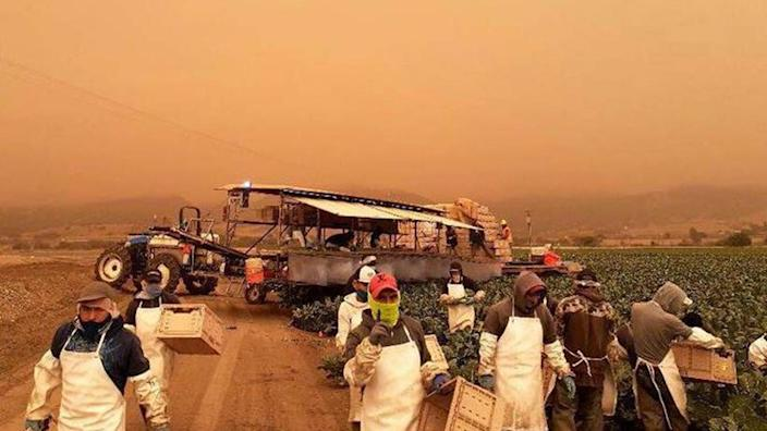 Farm laborers in California work in smoky conditions. (Courtesy of United Farm Workers)