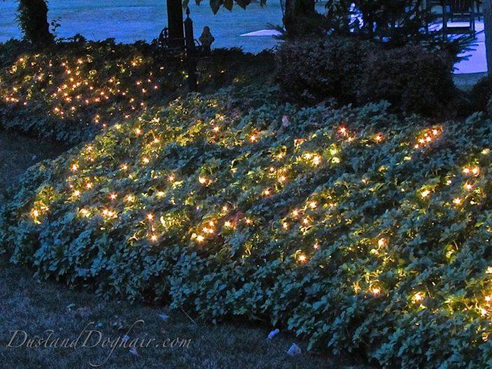 """<p>Pachysandra, english ivy, and other dense, sturdy plants work best for adding lights to your garden landscape, according to this blogger, who used incandescent string lights to give her garden a lovely glow.</p><p><strong>Get the tutorial at <a href=""""https://dustanddoghair.com/"""" rel=""""nofollow noopener"""" target=""""_blank"""" data-ylk=""""slk:Dust And Doghair"""" class=""""link rapid-noclick-resp"""">Dust And Doghair</a>.</strong></p><p><strong><a class=""""link rapid-noclick-resp"""" href=""""https://www.amazon.com/Beams-G40-Globe-Bulb-Incandescent/dp/B07TJJTYH4/ref=sr_1_1_sspa?tag=syn-yahoo-20&ascsubtag=%5Bartid%7C10050.g.3404%5Bsrc%7Cyahoo-us"""" rel=""""nofollow noopener"""" target=""""_blank"""" data-ylk=""""slk:Shop Incandescent String Lights"""">Shop Incandescent String Lights</a><br></strong></p>"""