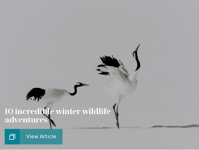 10 incredible winter wildlife adventures