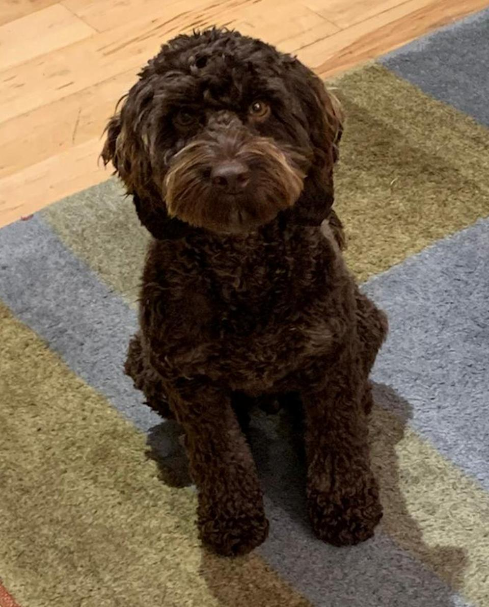 Gareth Jones is believed to have been with his brown cockapoo when he went missing. (Sussex Police)