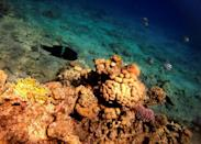 While coral populations around the world are under threat from bleaching caused by climate change, the reefs in Eilat have remained stable due to their unique heat resistance