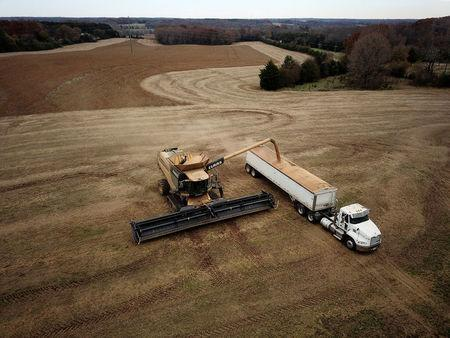 FILE PHOTO: Farmer Lucas Richard of LFR Grain harvests a crop of soybeans at a farm in Hickory, North Carolina, U.S. November 29, 2018. REUTERS/Charles Mostoller/File Photo