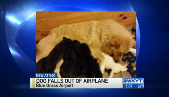 Dog dies after falling out of plane during takeoff