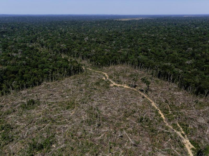 Enough rainforest to fill 30 football pitches destroyed every minute last year