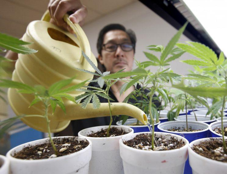 Canna Care employee John Hough waters young marijuana plants at the medical marijuana dispensary in Sacramento, Calif., August 2015. (Photo: Rich Pedroncelli/AP)