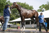 Belmont Stakes entrant Rombauer is washed after taking a training run ahead of the 153rd running of the Belmont Stakes horse race, Wednesday, June 2, 2021, at Belmont Park in Elmont, N.Y. (AP Photo/John Minchillo)