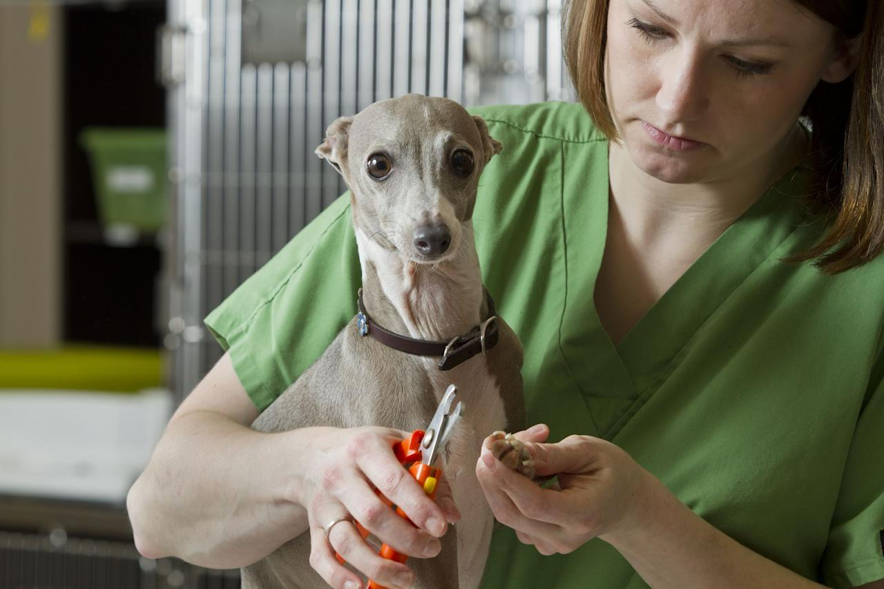 """<p>Trimming your pup's nails is a job that's usually best left to the vet or a professional groomer. But if you're trying to save money or keep nails trimmed between appointments, it could be beneficial to learn how to cut a dog's nails. </p><p>Cutting your dog's nails is not only important for appearance purposes, but for a dog's health as well. According to the American Kennel Club (AKC), long nails can be painful for your <a href=""""https://www.womansday.com/life/pet-care/g27886617/mixed-breed-dogs/"""" target=""""_blank"""">furry friend</a>, as they push back into the nail beds. This makes walking uncomfortable and can <a href=""""https://www.akc.org/expert-advice/health/nail-neglect-can-lead-to-health-problems-for-your-dog/"""" target=""""_blank"""">cause irreversible health problems</a>. </p><p>When you're about to cut your dog's nails, you'll notice there is a visible pink line you can only see if the nail is white. This pink flesh is called the quick, which contains blood vessels and nerves. You'll want to <a href=""""https://healthypets.mercola.com/sites/healthypets/archive/2018/11/09/dog-nail-trimming.aspx"""" target=""""_blank"""">avoid nipping the quick</a> because, according to Healthy Pets, this could cause bleeding and <a href=""""https://www.womansday.com/life/pet-care/a2612/9-things-your-dog-wants-to-tell-you-123609/"""" target=""""_blank"""">discomfort for your dog</a>.</p><p>We know it's a difficult process, but you can learn how to properly cut your dog's nails with these techniques and tools.</p>"""