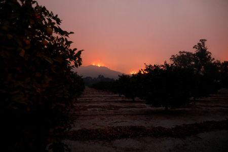 Wildfire flames burn on a hillside as fruit trees stand in a grove during the Thomas Fire near Montecito, California, U.S. December 12, 2017. REUTERS/Patrick T Fallon