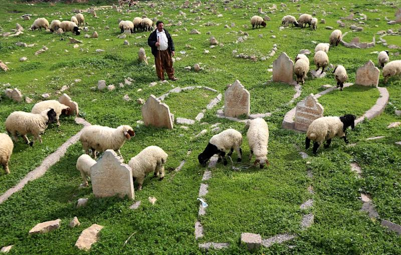 An Iraqi shepherd herds sheep in a cemetery on the banks of the Tigris River in the village of Wana, some 10 kms south of the Mosul Dam (AFP Photo/Safin Hamed)