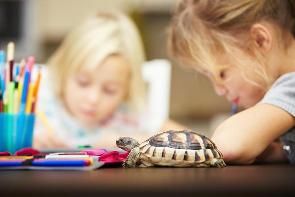 Girls and turtle. Siblings are doing his homework for elementary school.