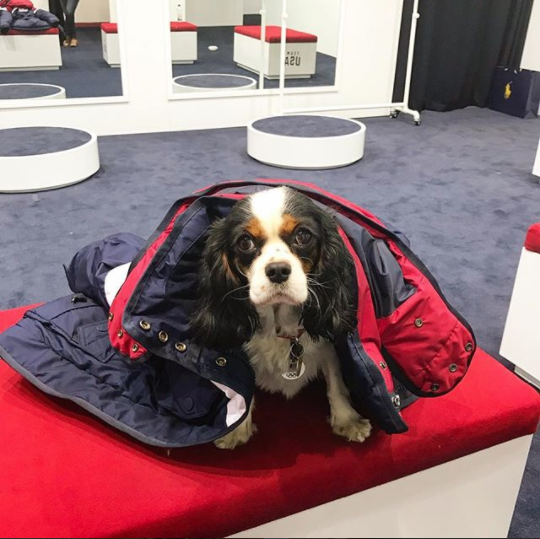 <p>Lindsey Vonn's dog: So Mom, I can walk in the opening ceremonies with you right? Jacket fits like a glove! #imready #putmeincoach (Photo via Instagram/vonndogs) </p>