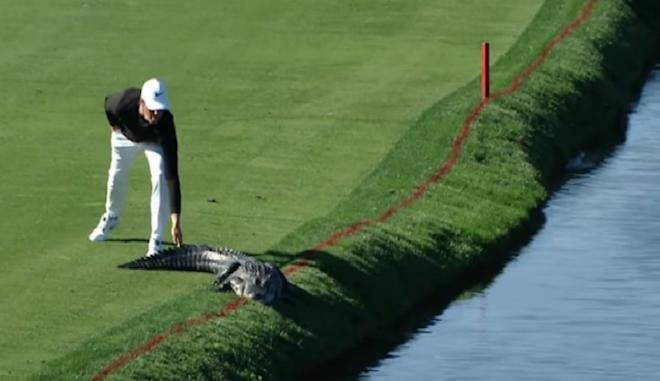 golf, alligator