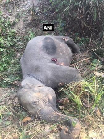 Two elephant cubs dies in Uttarakhand after being hit by Ranikhet Express