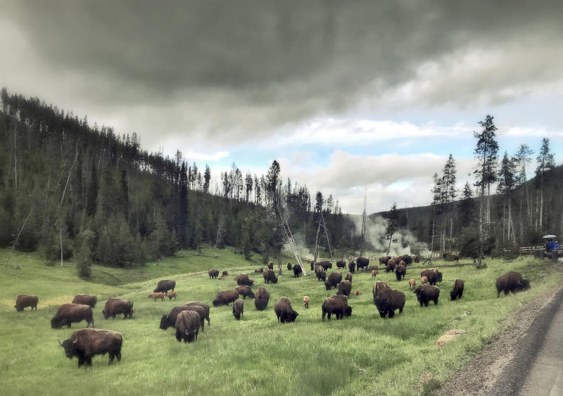 Bisons grazing near Devils Den in Yellowstone National Park in Wyoming, on July 5, 2018. | Soeren Stache—picture-alliance/dpa/AP